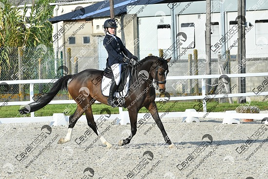 Genech (07 oct. 2018) - Dressage